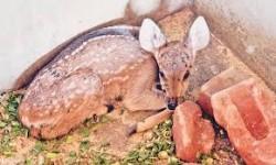 EJ Deer