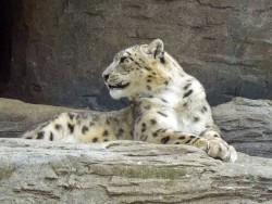 EJ Leopard