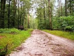 EJ Forestation
