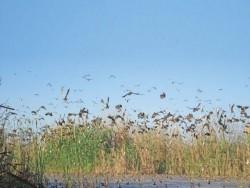 EJ migratory birds